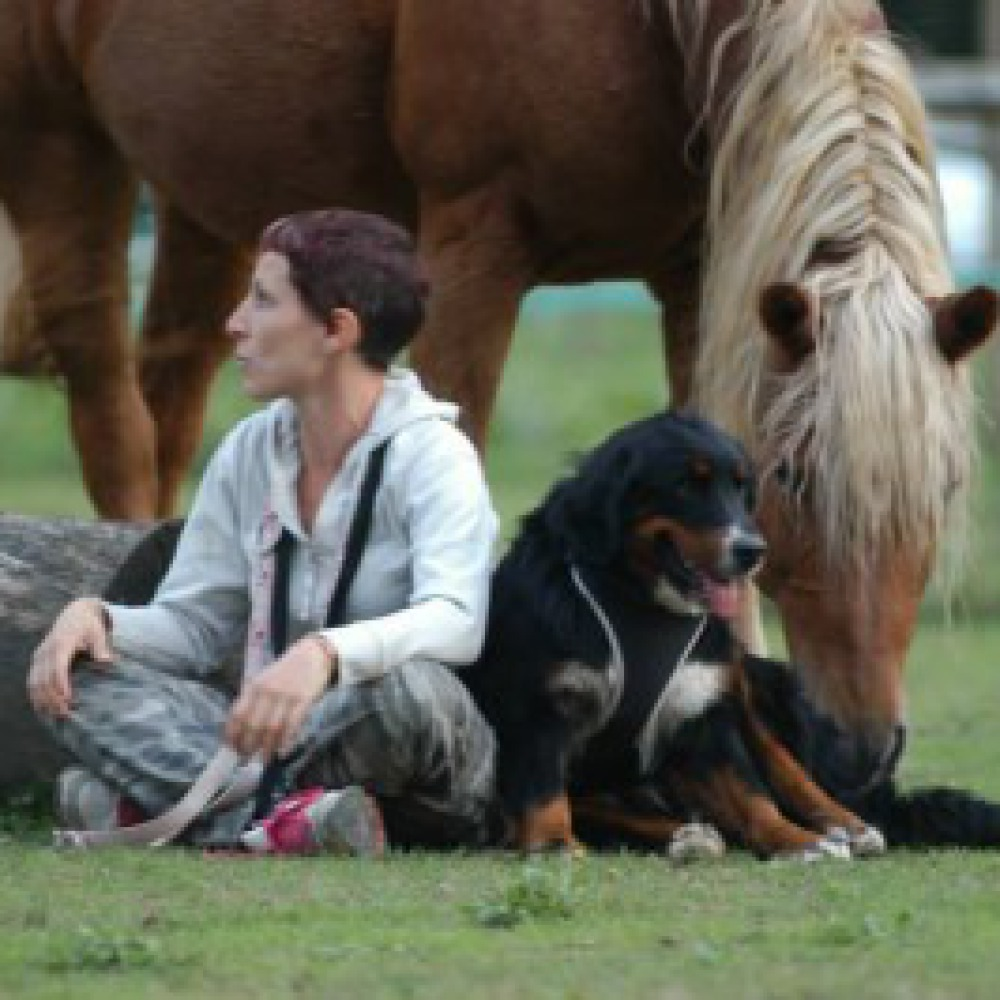 Appartamenti in fattoria animali, sapori bio