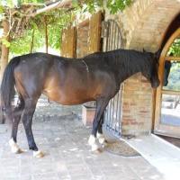 Apartment in a horse farm in Maremma
