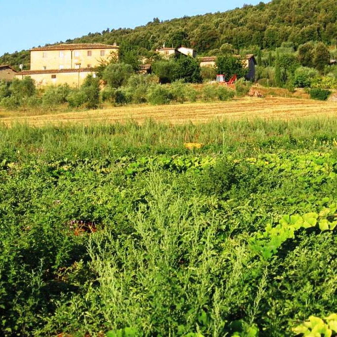 Bio-farm b&b in Siena