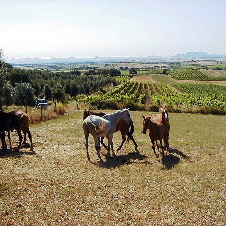 Discovering Maremma coast on horse