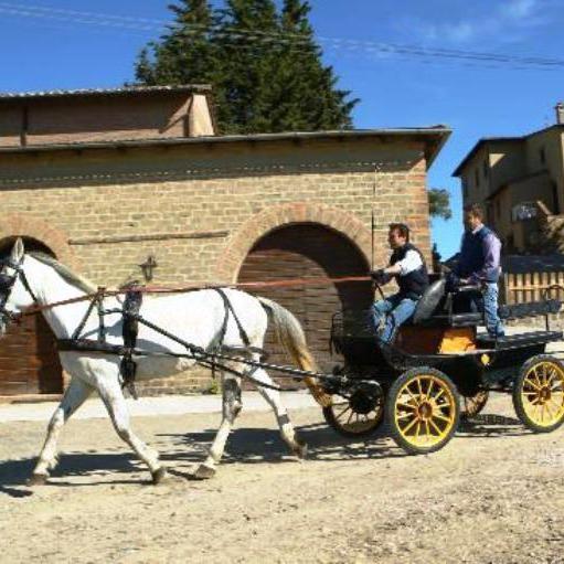 Agriturismo con terme, cavalli e gastronomia
